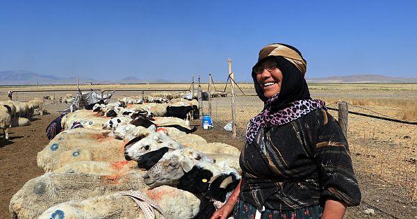 """Bu kadınlar koyunlarını yüzlerce yıllık """"koşan"""" yöntemiyle sağıyor"""