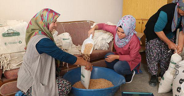 Göktepe'de boş arazilere ekilerek elde edilen nohut öğrencilere burs oldu