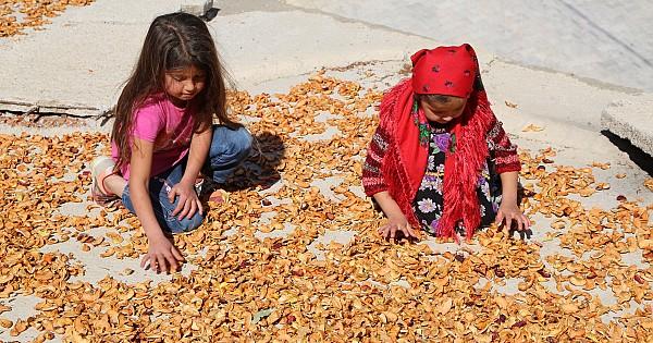 Tonlarca yiyecek her gün çöpe atılırken Taşeli halkı 1 kilo meyveyi bile ziyan etmiyor