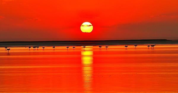 Kuş cenneti Tuz Gölü'nün misafir flamingoları evlerine gelmeye başladI