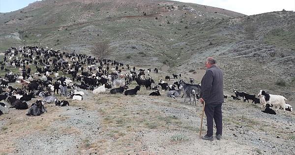 Sarıkeçeli yörüklerinin göçü Karaman'a ulaştı
