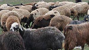 Afgan çobanların kavgasında kan aktı: 1 ölü