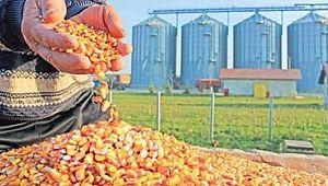 Bayram uyardı: mısırınızı satarken acele etmeyin