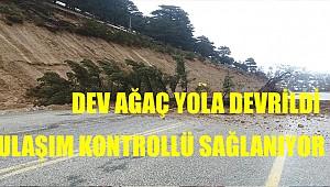 Sertavul'da yola ağaç devrildi. Ulaşım kontrollü sağlanıyor