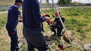 Konya'da vijdansızların su kuyusuna attığı köpek yavrularını itfaiye kurtardı