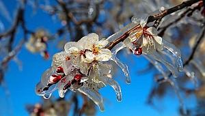 Meteorolojiden Karaman için hafif zirai don uyarısı