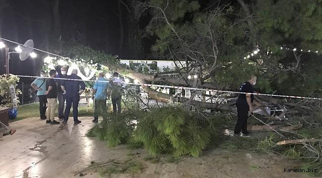 Antalya'da kır düğününde ağaç davetlilerin üzerine devrildi: 2'si ağır 10 yaralı