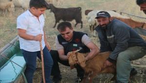 Kırşehir'de 5 yılda küçükbaş havan sayısı yaklaşık yüzde 50 arttı